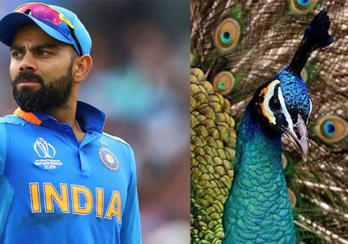 The IPL being courted by various strutting peacock associations